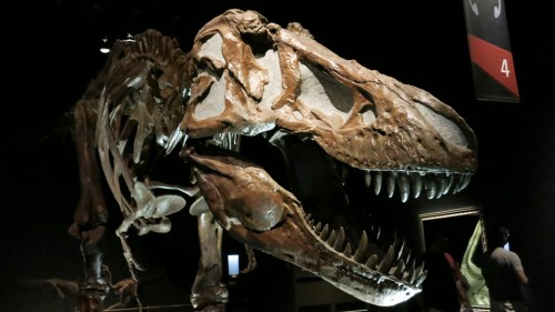 The Royal Tyrrell Museum